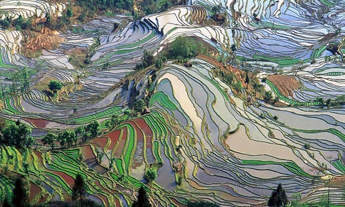 Has the spring sprung for China's crop biodiversity?