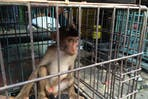 baby monkey in cage