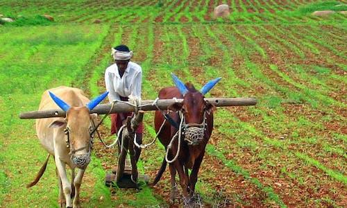 Combatting soil erosion enriches farmers in Meghalaya