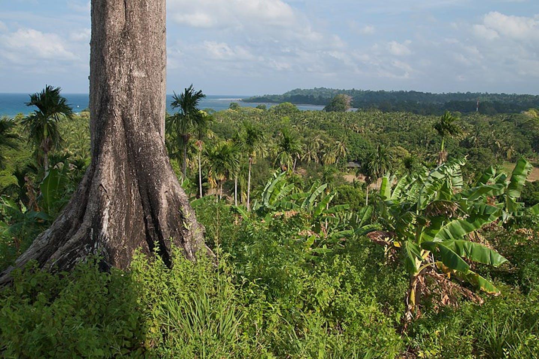vegetation India