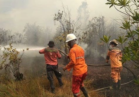Fire fighters tackle forest fires in Sumatra, Indonesia Image: Sipongi