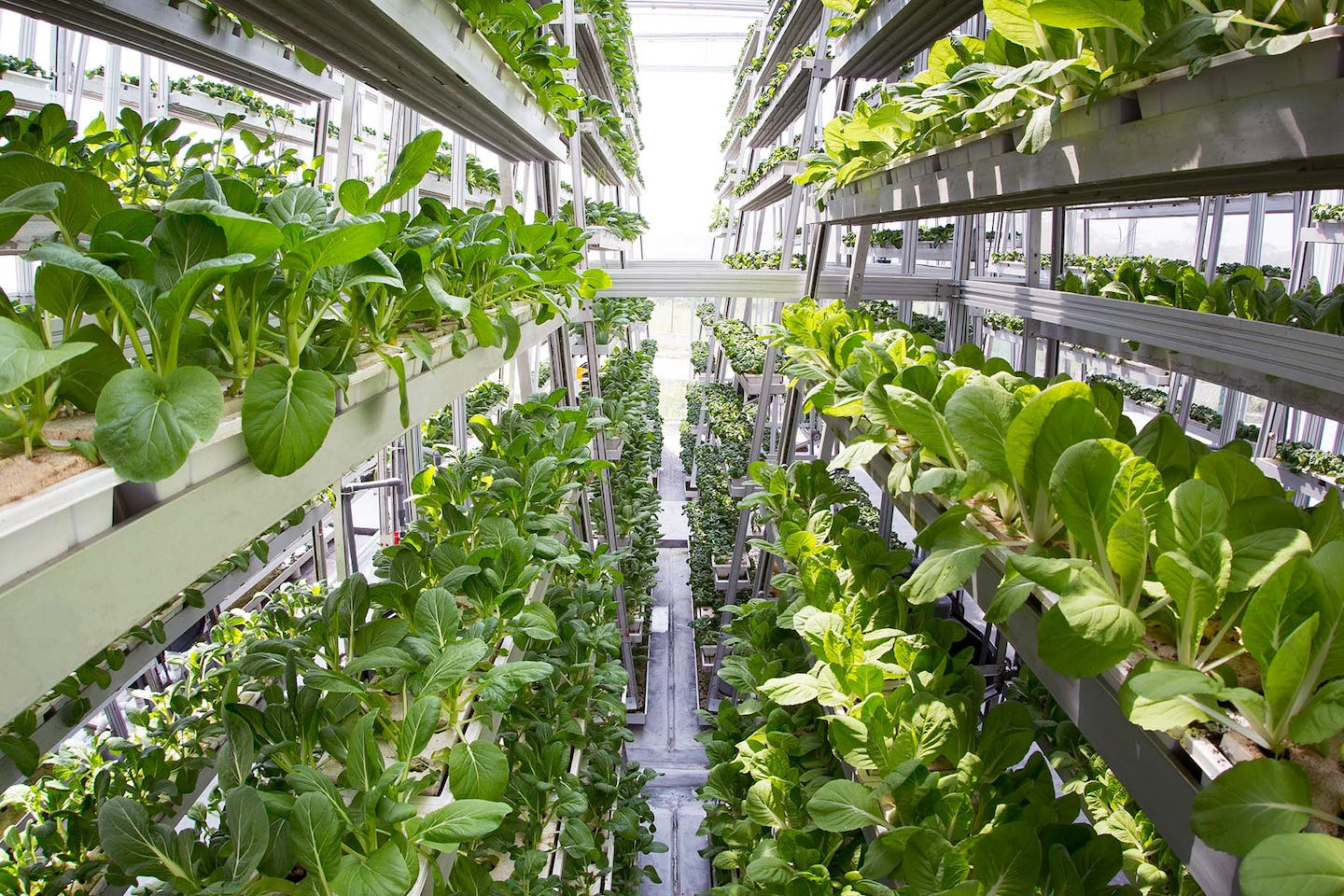 Sky Greens' vertical farming systems in the background. Each vertical tower requires only 40 watts of electricity to operate—the equivalent of one lightbulb. Image: Sky Greens