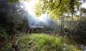 Satellite alerts seen helping fight deforestation in Africa