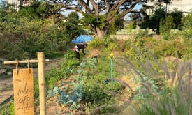 Thai landfill turned into urban farm to feed poor during pandemic