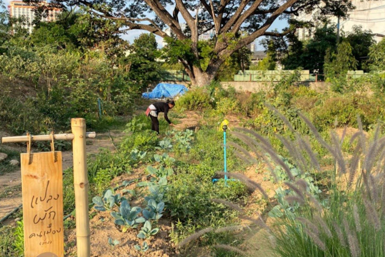 Thai urban farm