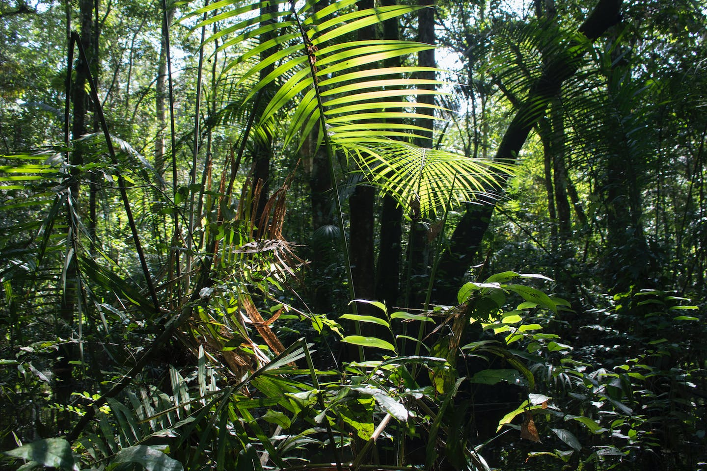 The Emerging Threat of Extractives Sector to Intact Forest Landscapes