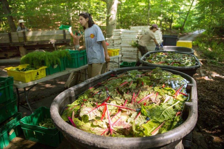 US veg farm