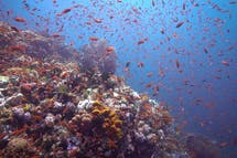 New gas development threatens Philippine marine protected area