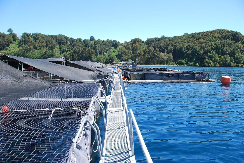 Chile salmon farm