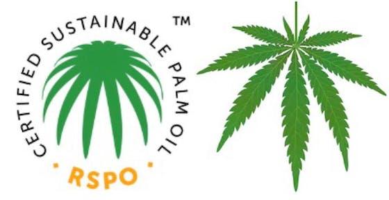 Too similar? The RSPO logo and the marijuana leaf. Image: Eco-Business
