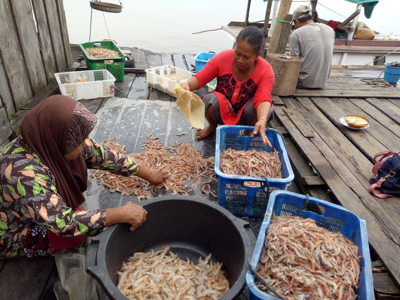 Zuper shrimp enterprise