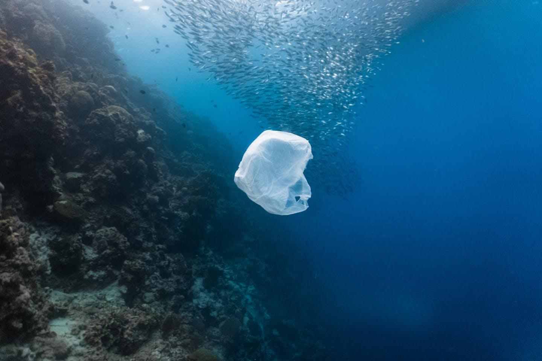 Plastic bag floats near bait ball. Image: WWF
