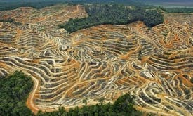 Palm oil giant Wilmar quits High Carbon Stock Approach citing governance issues