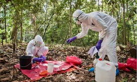 Address risky human activities now or face new pandemics, experts warn