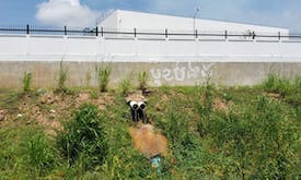 Cambodia embraces dirty energy fearing drought-driven shortages