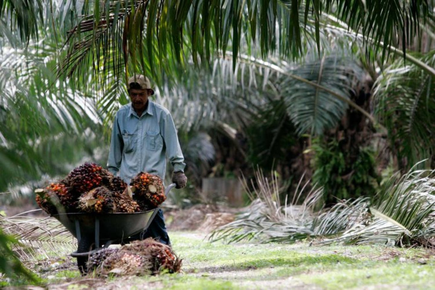 Can only western buyers afford sustainable palm oil?