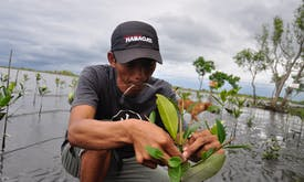 Philippines' mangroves could generate first-of-its-kind blue carbon credits in Asia-Pacific