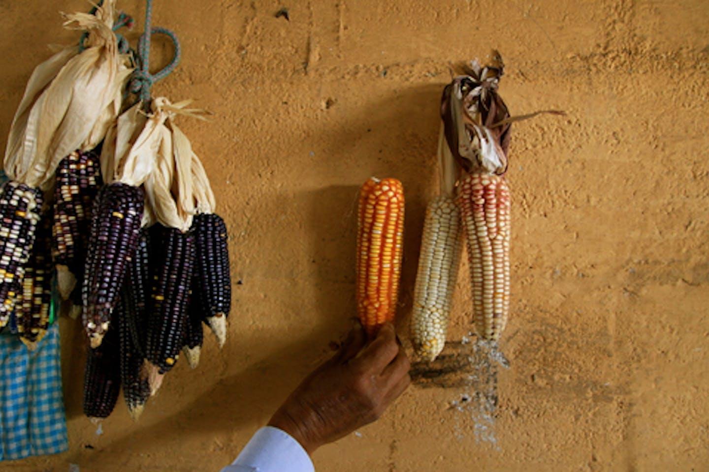 agroecology farmer