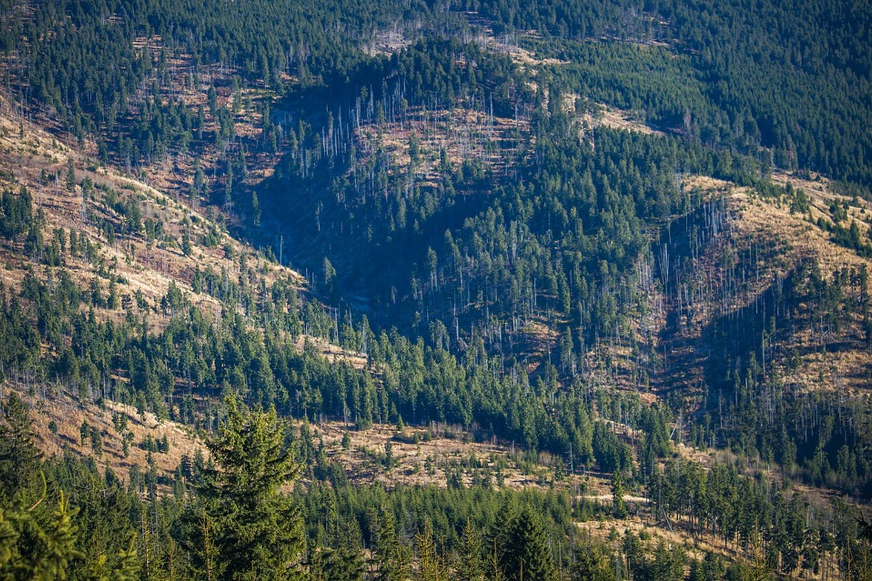 deforestation overseas
