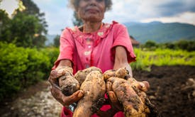 The world is converging on the need for sustainable agri-food systems