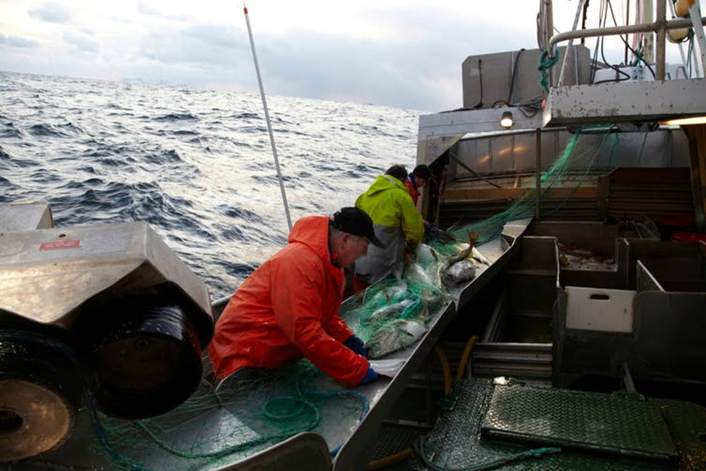 The Atlantic: the driving force behind ocean circulation and our taste for cod
