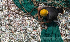 Billions in fishing subsidies finance social, ecological harm: Report