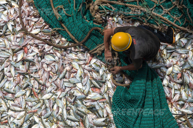 fishing subsidies social ecological harm