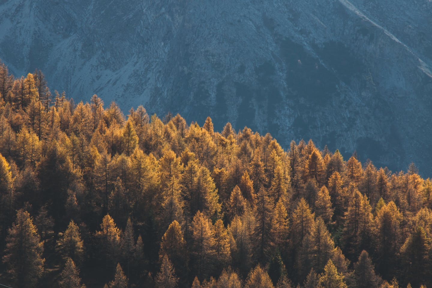 generic forests image