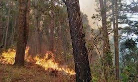 Forest fires rage in northern Thailand