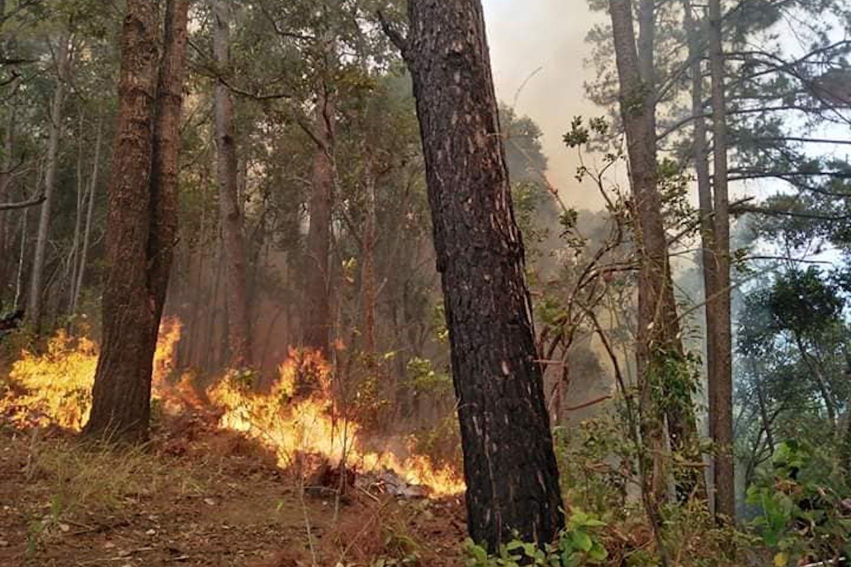 forest fires thailand 2020