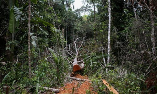 New warning system to sound alarm on rainforest 'tipping points'