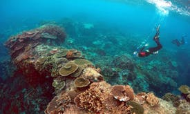 Great Barrier Reef row piles pressure on Australia for climate action