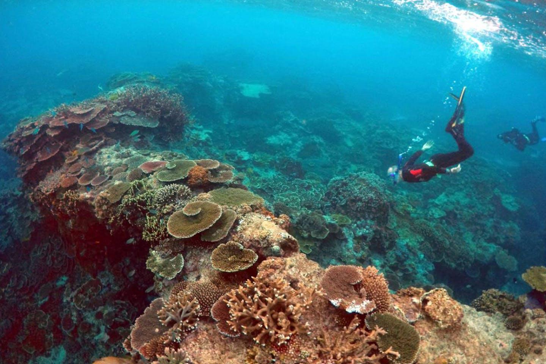 great barrier reef in danger
