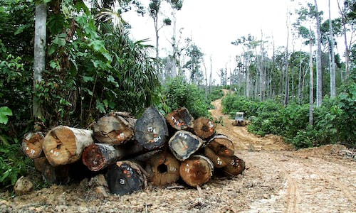 Illegal loggers in Sulawesi use pandemic as cover to ramp up activity