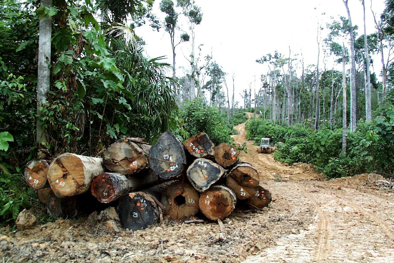illegal logging in indonesia