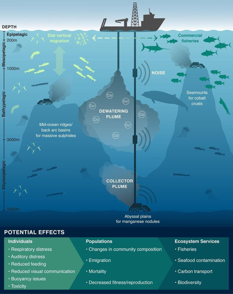 The impacts of deep-sea mining sediment plumes