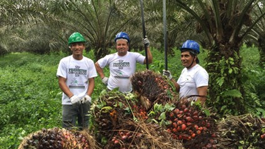 Palm oil farmers working with Natural Habitats