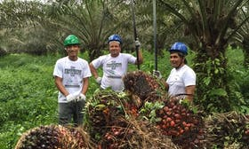 Is there such a thing as sustainable palm oil?
