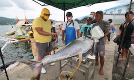 Indonesia evaluating fish stock health to improve sustainable planning