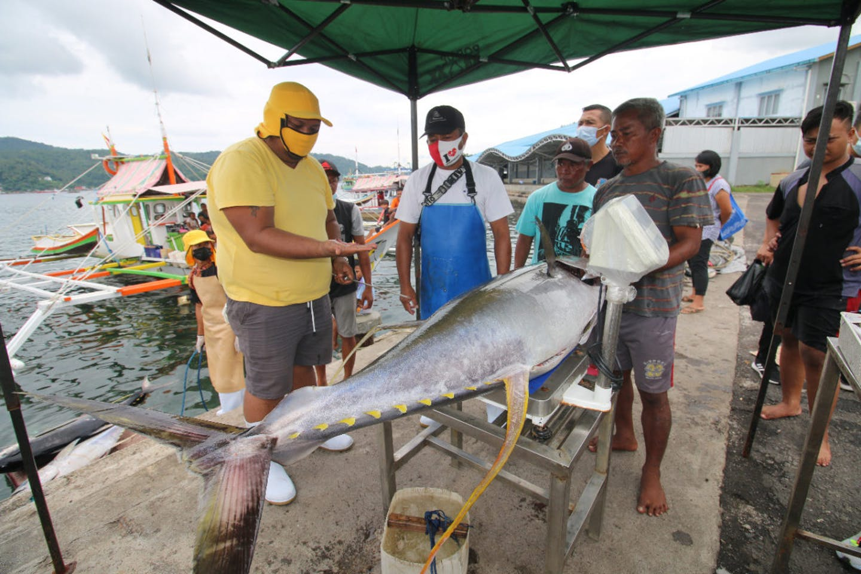 indo fish stock health