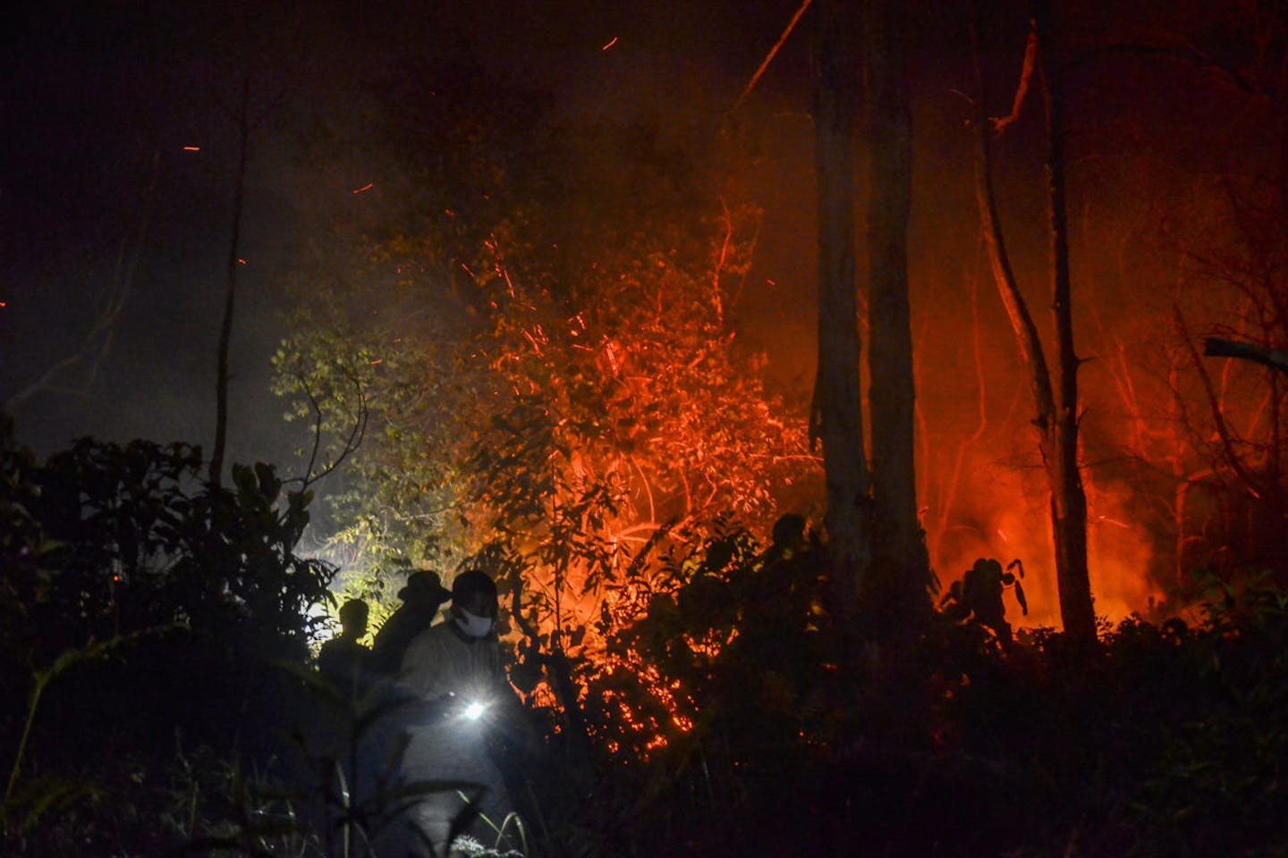 indonesia forest fires and Covid-19