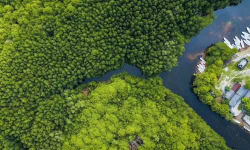 How is innovation fueling the growth of nature-based solutions?