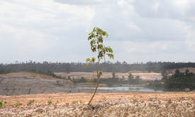Explainer: Is tree planting as good for the Earth as we believe?