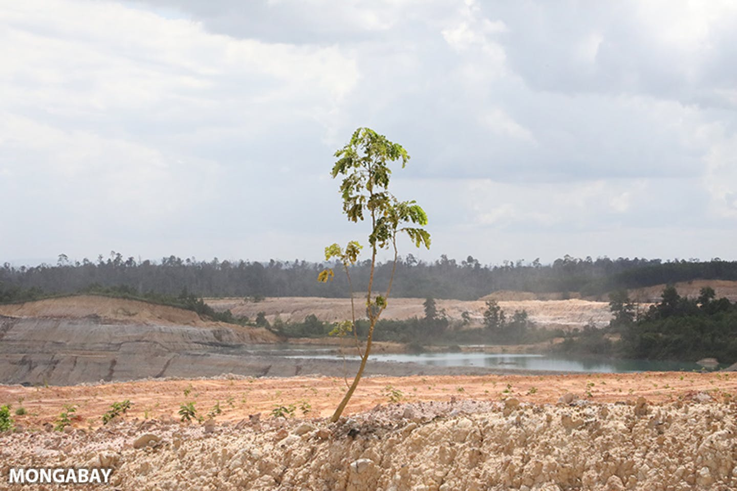 Is planting trees as good for the Earth as everyone says?