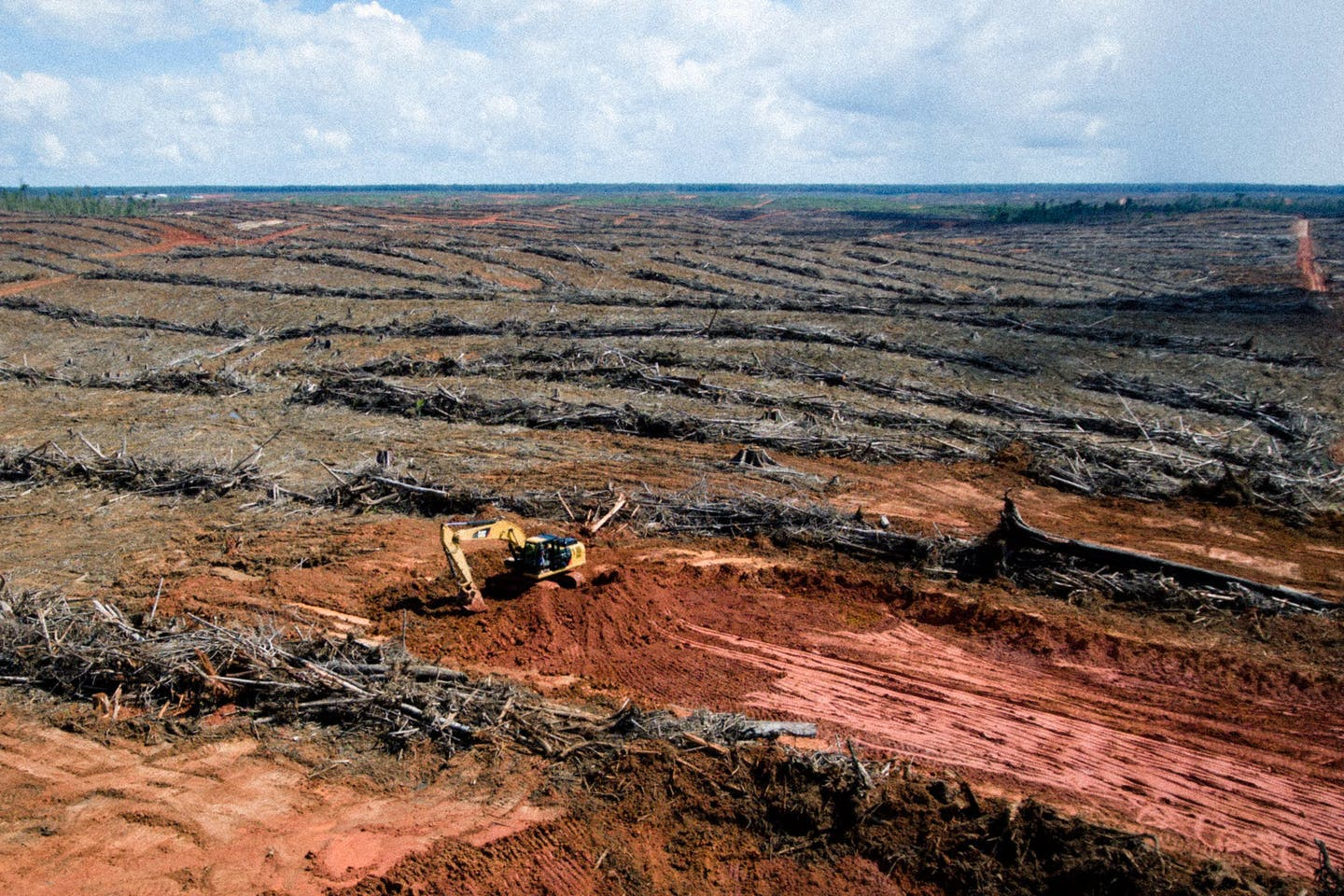 Widespread land clearing in a Korindo-owned PT Papua Agro Lestari concession in Papua