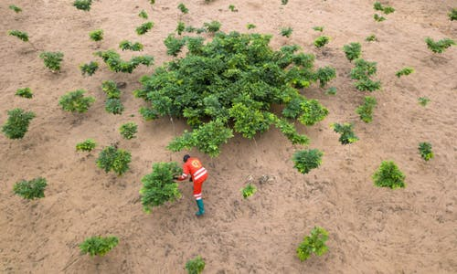 Lessons from the rush to reforest