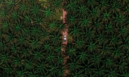 Banks responsible for continuing deforestation in Southeast Asia