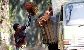 Who gets to define sustainable palm oil?