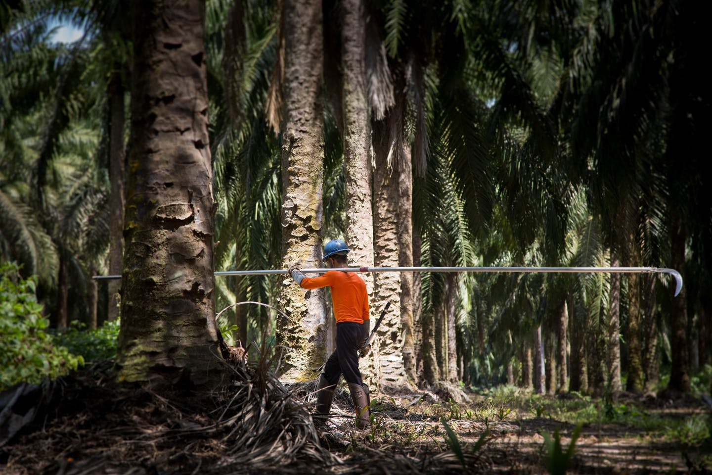 oil palm global threat to health