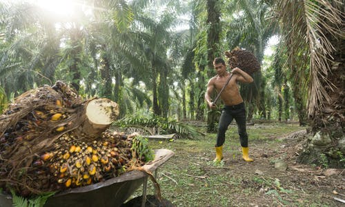 Can palm oil become a sustainable investment?